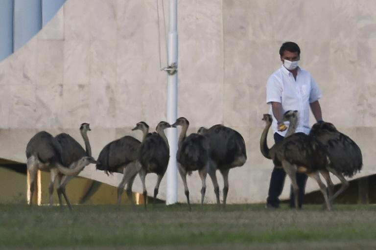 Brazilian President Jair Bolsonaro, who says he is bored staying at home after testing psoitive for COVID-19, feeds emus outside the Alvorada Palace in Brasilia