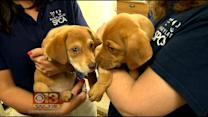 Siblings Rescued From Puppy Mill Closer To Finding A Home
