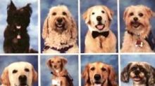 Grateful Parkland Students Honor Therapy Dogs With Yearbook Page