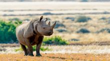 A Trophy Hunter Paid $400,000 To Shoot A Rhino. Now He Wants To Bring It Home.