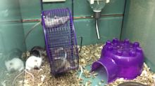 Mouse hangs on for dear life!