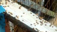 Swarms of ladybugs overtake homes