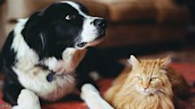 Check your pets DNA with these affordable kits