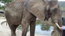 Venezuela: un veterinario termina en una jaula por denunciar la crisis de un zoológico