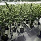 Canopy Growth losses sends pot stocks tumbling