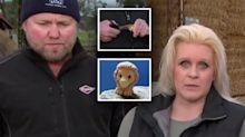 Surprise response after farmer destroys rare Ooshie on live TV