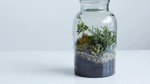 How To DIY A Terrarium That Even You Can't Kill