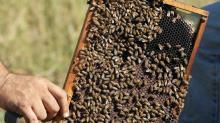 Hurricane Michael could sour Florida's tupelo honey harvest