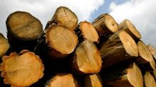 Man chops down 27 trees in Missouri national forest to sell the timber, feds say