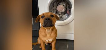 VIDEO: Sad puppy watches as toy goes into the wash