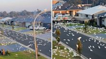 Incredible scenes as hundreds of birds cover Sydney street