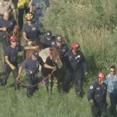 'Cupcake' the Horse Pulled From Muddy Water in 2-Hour Rescue