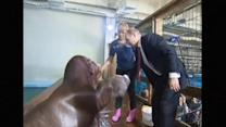 Putin Feeds Dolphins, Shakes Hands with Walrus on Trip to Russia's Far East