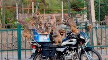 Girl killed by monkeys who chased her off roof in India