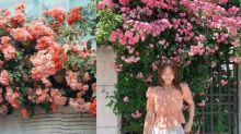 韓妞搶著拍!首爾最浪漫打卡點粉紅玫瑰圍牆