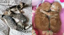 Kittens rescued during lockdown
