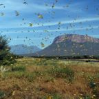 Locusts the latest curse of East Africa weather extremes