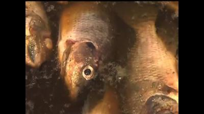 Mexican Toxic Spill Kills Thousands of Fish
