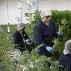 Marijuana stocks get contact high from Congress