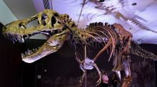 A 67-million-year-old skeleton belonging to a Tyrannosaurus rex named Stan is going up for auction in October
