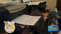Cat Battles Printer in Epic Grudge Match
