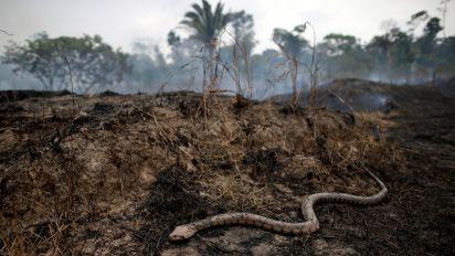 Como o fim da Amazônia prejudica a sua vida