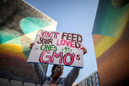 "FILE PHOTO: A woman holds a sign during one of many worldwide ""March Against Monsanto"" protests against Genetically Modified Organisms (GMOs) and agro-chemicals, in Los Angeles, California October 12, 2013. REUTERS/Lucy Nicholson/File Photo"