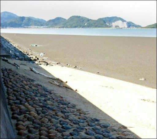 An Japans Küsten sterben ungewöhnlich viele Urzeitkrebse