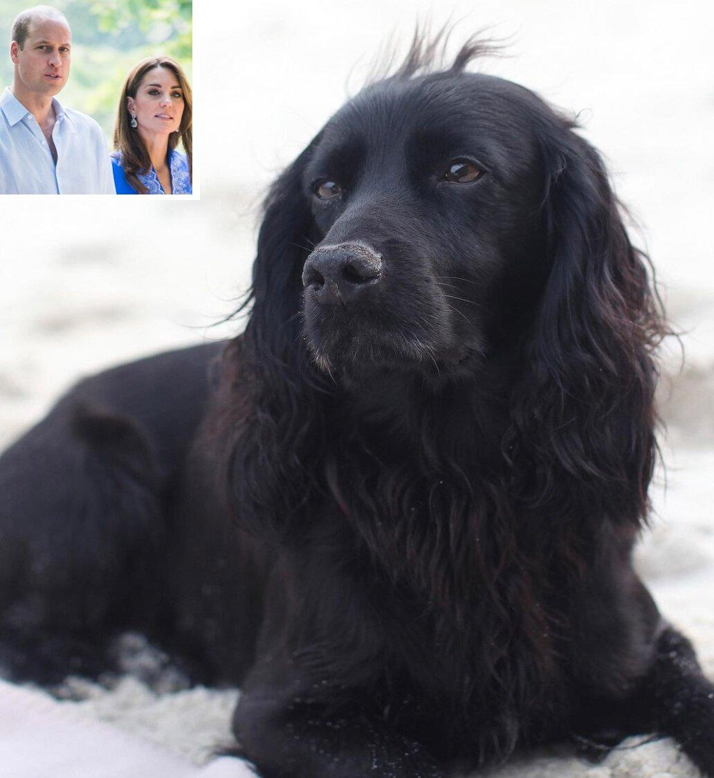 Prince William and Kate Middleton Mourn the Death of Beloved Cocker Spaniel Lupo