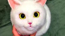 Moda felina: conheça as bolsas que imitam gatos