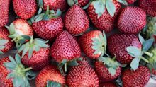 Foodie's gadget hack to check strawberries for needles