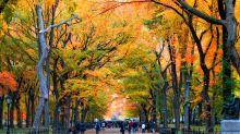 5 anecdotes que vous ignorez probablement sur l'automne