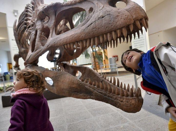 Tyrannosaurs may have hunted in packs like wolves, a new study says, undermining the idea they were solitary predators
