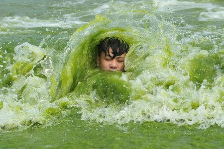 A boy plays on a algae-covered beach in Qingdao, Shandong province, China July 18, 2016. Picture taken July 18, 2016. REUTERS/Stringer/File Photo