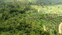 If consumers boycott palm oil products it could lead to more deforestation