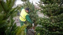 Weihnachtsbäume: Für die Umwelt kein Geschenk