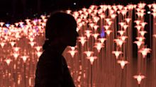 Victoria Ward Park opens in Honolulu with an immersive light show (Slideshow)