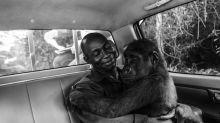 Süße Umarmung eine geretteten Gorillas gewinnt Wildlife Photographer of the Year-Preis