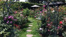 藏在都市裡的花園仙境!冶豔玫瑰盛開超浪漫