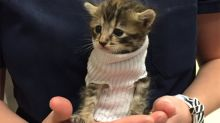 Rescued kitten in tube sock sweater wins hearts, finds new home