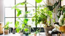 Are your houseplants environmentally friendly?
