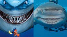 Encuentran a un tiburón clavadito a Bruce de Buscando a Nemo