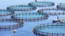 Es hora de parar el desastre de los antibióticos en las piscifactorías