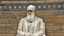Natural History Museum to review potentially 'offensive' Charles Darwin collection