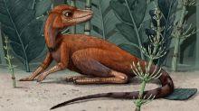 Scientists Discover Tiny Dinosaur Relative