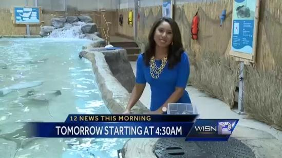 Thurs. on WISN 12 News This Morning: Feed stingrays and sharks!