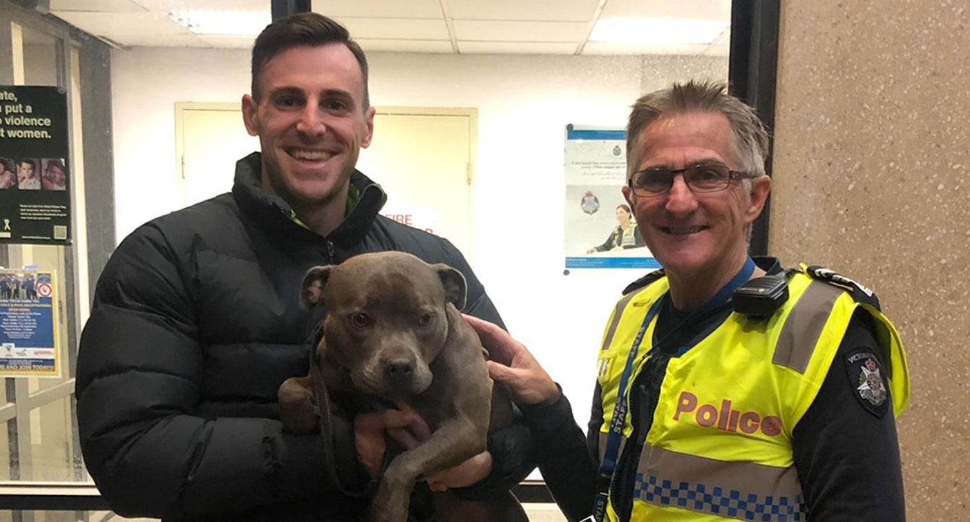 Stolen staffy returned to Melbourne owners after CCTV of theft goes viral
