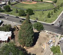 Rolling sequoia: Idaho tree tied to John Muir set for move