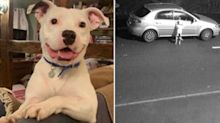 Dog who was abandoned in video that went viral finds new home