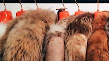 Should Fur Be Banned Outright? The Government Is Being Urged To Consider It
